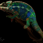 Painted Chameleon by Robert Chapman