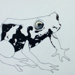 Drawing of a Shape-shifting Frog by Robert Chapman
